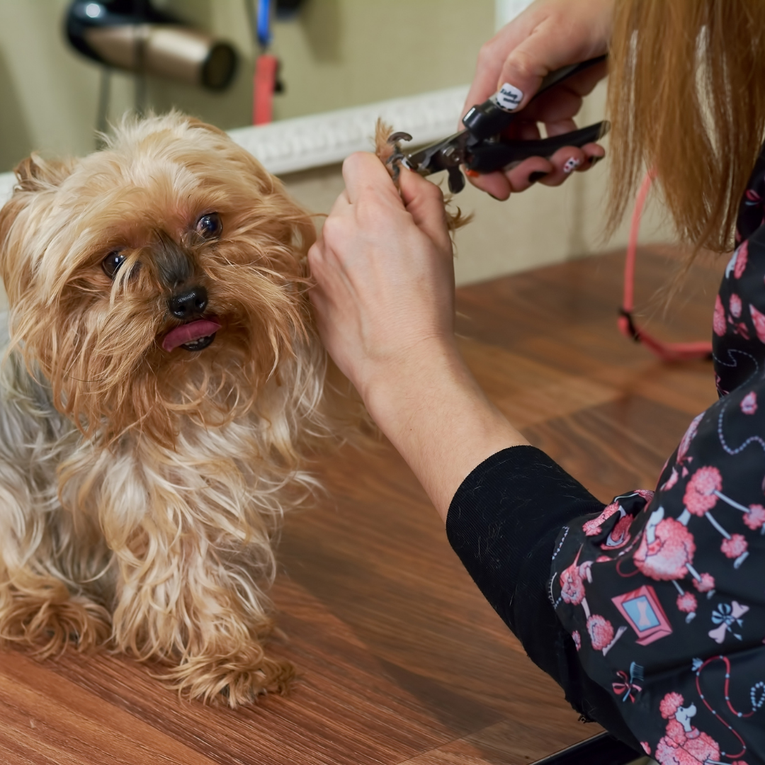 The Best New Tech for Dog Owners in 2021
