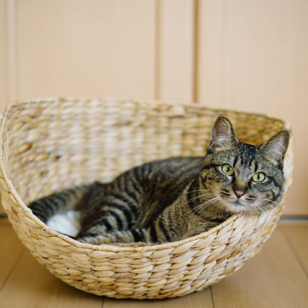 5 Cat Products We Couldn't Live Without